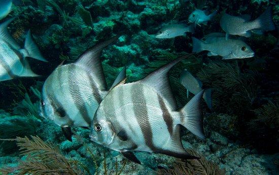 Foto de Molasses Reef