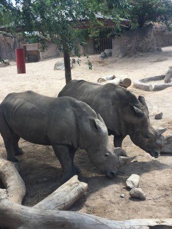 ABQ BioPark Zoo: photo1.jpg