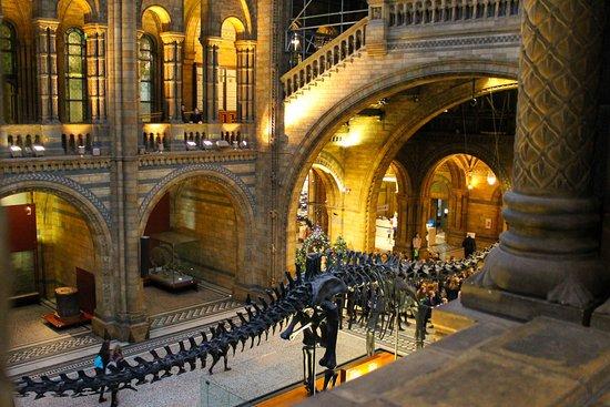 Αποτέλεσμα εικόνας για Μουσείο Φυσικής Ιστορίας, Λονδίνο, Ηνωμένο Βασίλειο