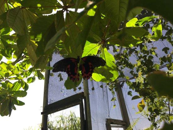 The Butterfly Farm (La Ferme des Papillons): photo0.jpg