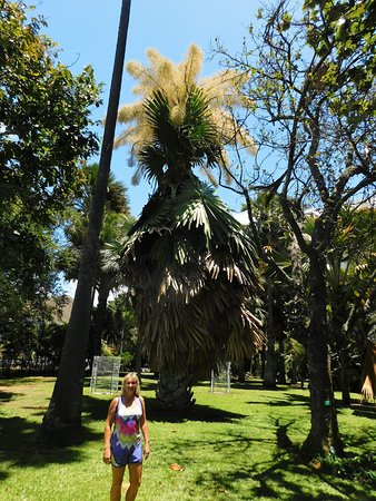 Foster Botanical Gardens: largest flowering palm in the world