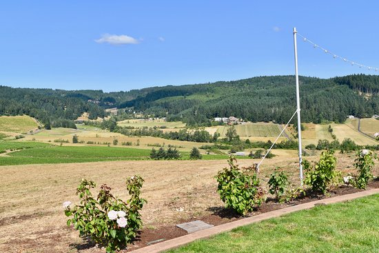 Eugene, OR: View of vineyards