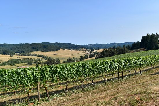 Eugene, OR: View of vineyard
