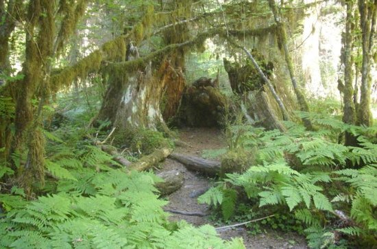 Private Olympic Peninsula and Forest...