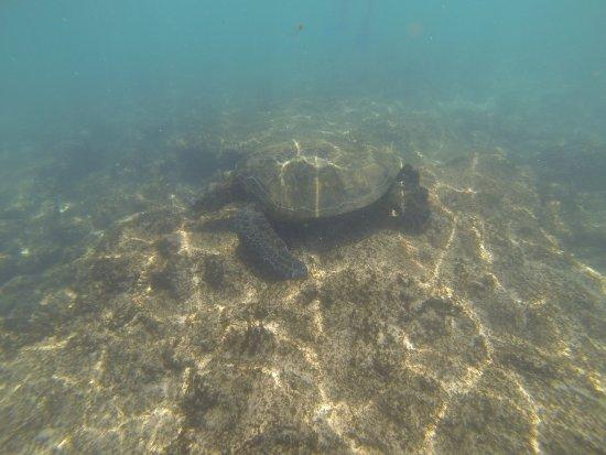 Ka'anapali, Hawaï: Saw Lots of Turtles