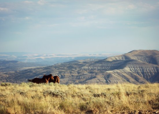 Rock Springs, WY: Two horses among a stunning Wyoming backdrop