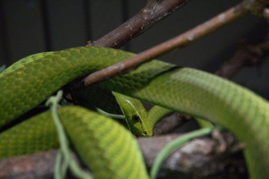 at reptile gardens.