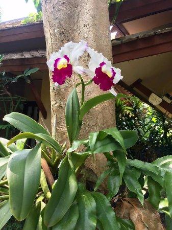 Rummana Boutique Resort: Garden