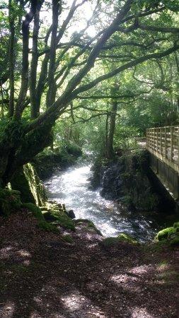 Eskdale, UK: Stanley Ghyll Force Waterfall