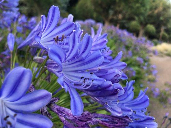 Lower Leas Coastal Park: Flower