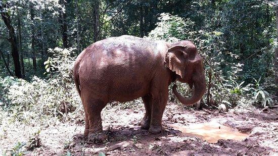 Sen Monorom, Kamboçya: Bath time