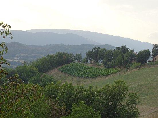 사르나노 사진