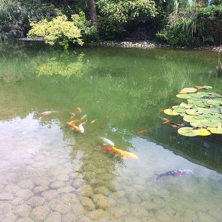 Jardin japonais le havre frankrijk beoordelingen - Jardin japonais le havre ...
