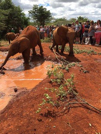 David Sheldrick Wildlife Trust: photo3.jpg