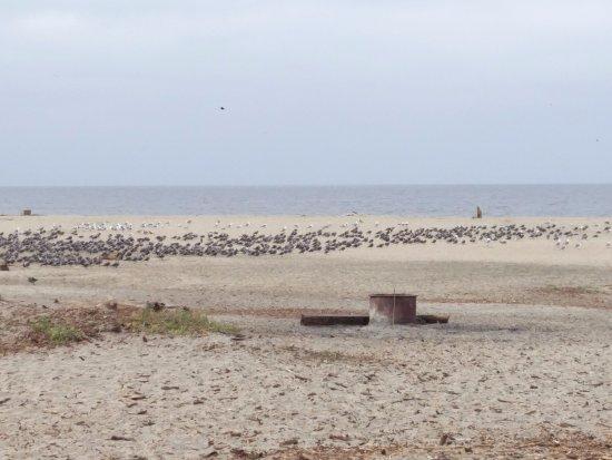 Aptos, CA: Birds everywhere