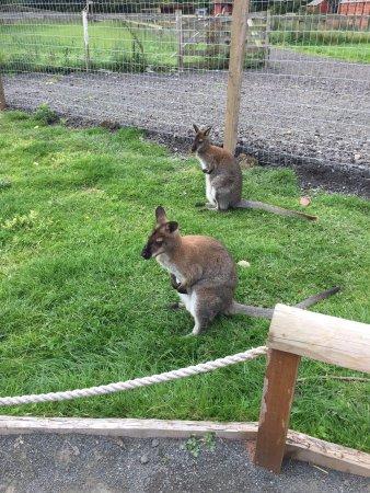 Northumberland Country Zoo Photo