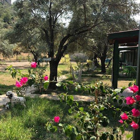 Mesudiye, Turquía: Zeytin ve badem ağaçlarıyla ve dağ manzarasıyla, gürültüden uzak huzurlu bir ortam burası