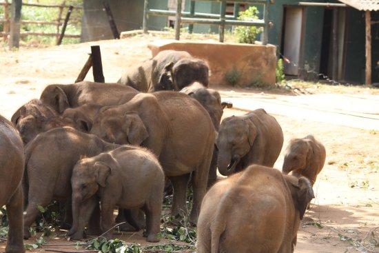 Uda Walawe National Park, Sri Lanka: photo0.jpg