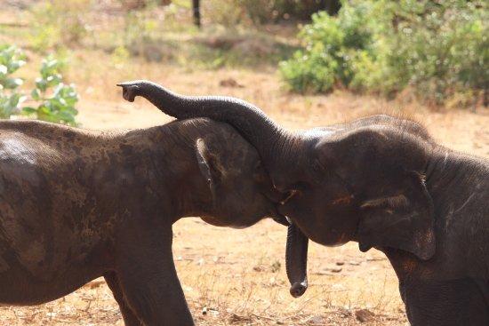 Uda Walawe National Park, Sri Lanka: photo1.jpg
