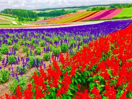Biei-cho, Japonia: Rainbow fields