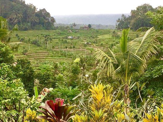 Seraya, Indonesia: Pondok Lembah Dukuh Homestay