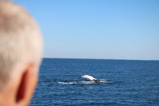 Hervey Bay, Australia: whales