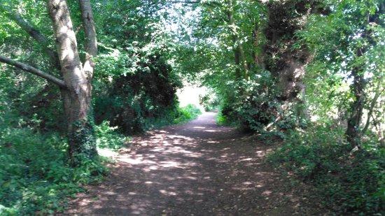 Daventry, UK: IMG_20170817_141927_large.jpg