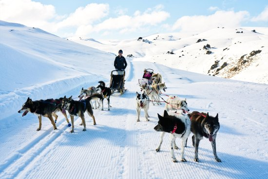 UnderDog Sled Dog Tours