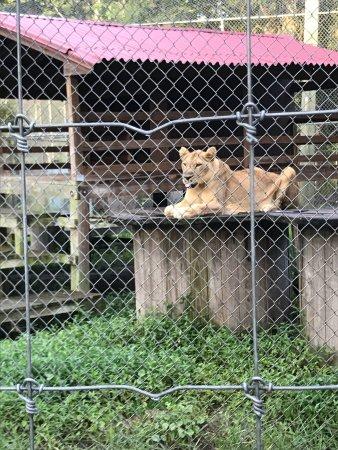 Catty Shack Ranch Wildlife Sanctuary: This place is open only on specific dates and times. I enjoyed being there for the feeding. This