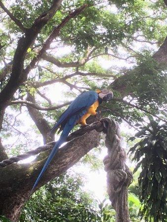 Deshaies, Guadeloupe: photo5.jpg