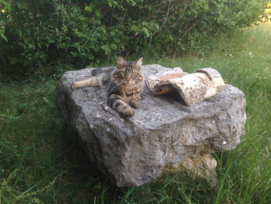 Saint-Martin-de-Bromes, France: Platon tranquille sur son rocher