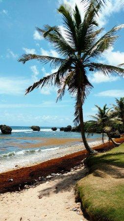 Saint Michael Parish, Barbados: Côté Atlantique