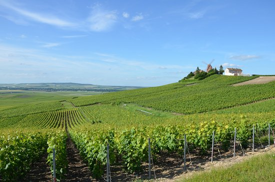 Mailly-Champagne, France : Le Vignoble