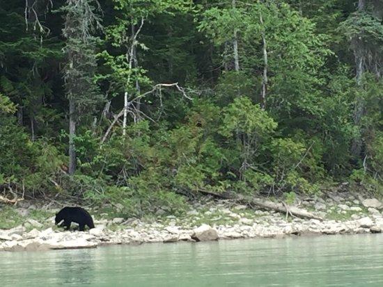 Blue River, Kanada: photo3.jpg