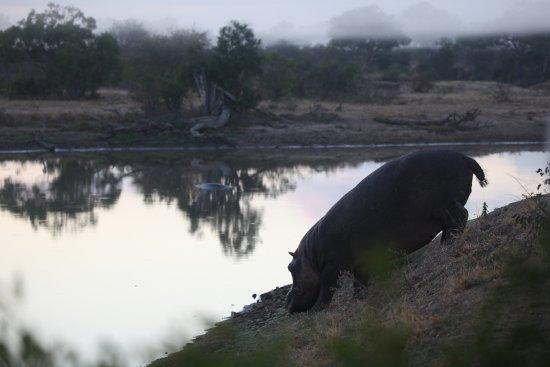 Timbavati Private Nature Reserve-billede