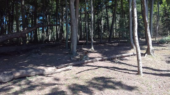 Kintzheim, France: Montagne des singes