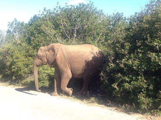 Addo Elephant National Park, Südafrika: photo5.jpg