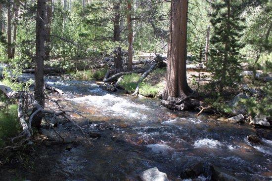 June Lake, كاليفورنيا: Stream next to the trail