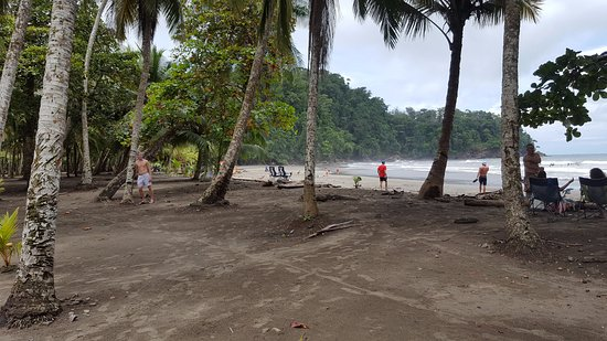 Ballena, Costa Rica: Palm trees and beach