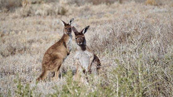 Buronga, Australia: photo6.jpg
