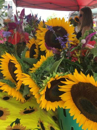 Fredericksburg, VA: Sunflower Season is my favorite season.
