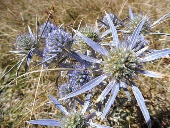 Nocera Umbra, İtalya: fiori estivi dell'Alago