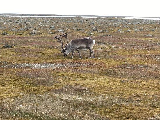 Isfjord Radio: photo6.jpg