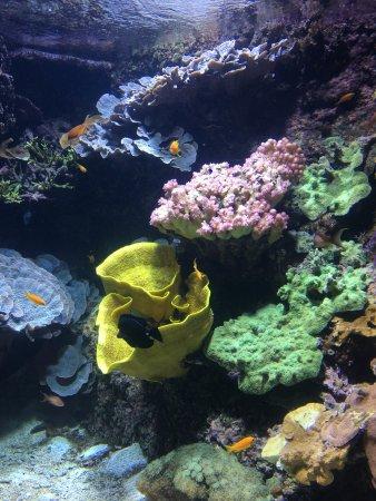 vue du restaurant photo de le cafe de l aquarium la rochelle tripadvisor