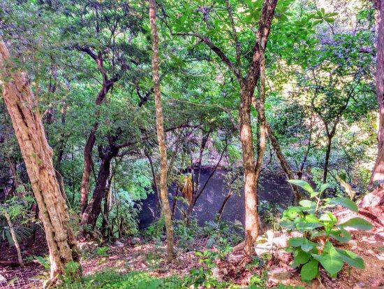 El Caracol - Observatorio : Cenote Xtoloc, próximo ao Observatório