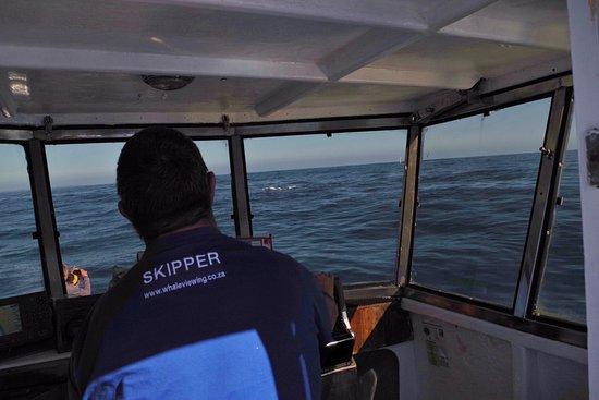 Ivanhoe Sea Safaris: Buscando cetáceos