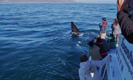 Ivanhoe Sea Safaris: Ballenas realmente cerca