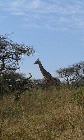 Pietermaritzburg, África do Sul: IMG-20170812-WA0007_large.jpg