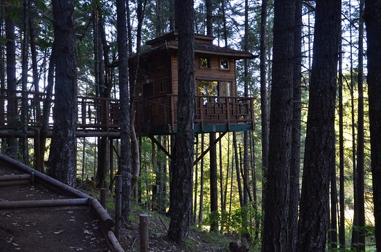 Vertical Horizons Treehouse Paradise: Shitake Treehouse and its access