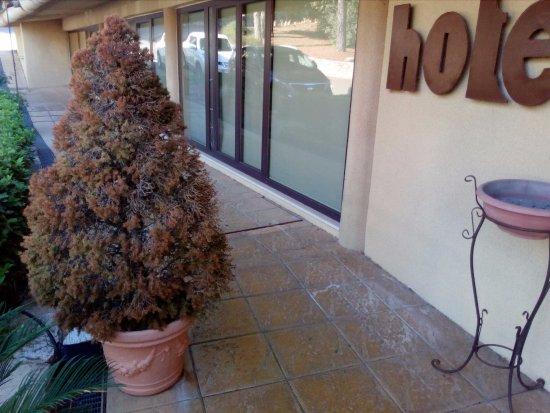 BlueBay Colle della Trinità Perugia : piante tutte secche e niente fiori